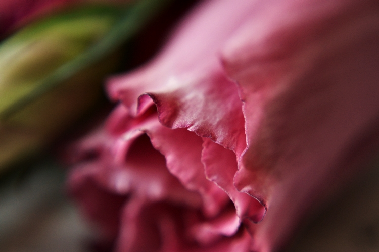 Detail einer beerenfarbenen Blüte { by it's me! }