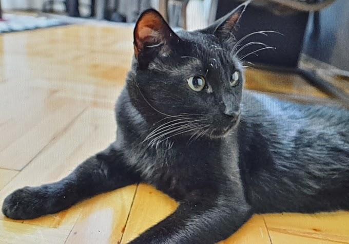Bir kedim vardı… Meğer Kendi Ellerimle öldürmeye götürmüşüm.