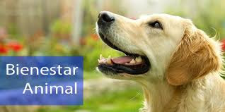 Ley bienestar animal