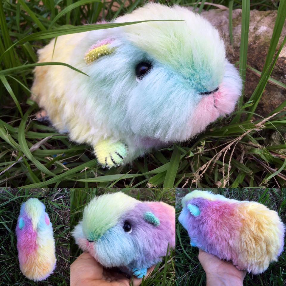 all things guinea pig rainbow guinea pig