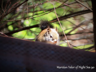 Idaho Squirrel