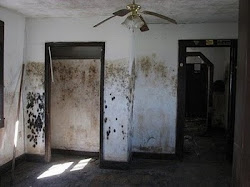 Black Mold Remediation