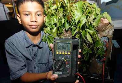 Bocah penemu energi listrik terbarukan dari pohon kedondong