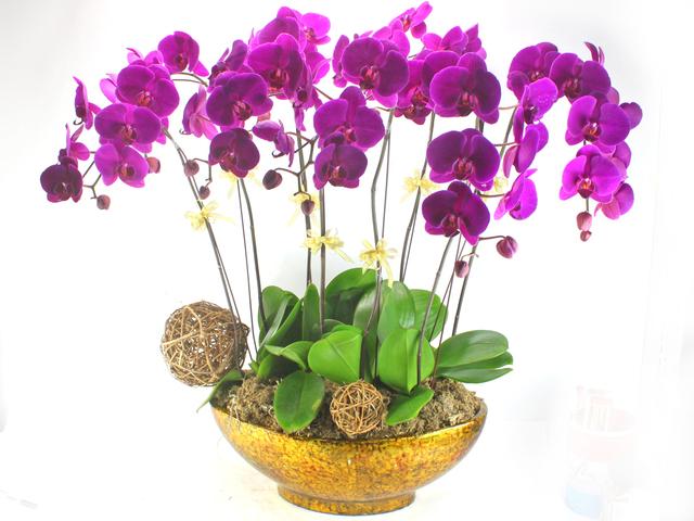Chăm sóc cây hoa lan vào mùa mưa