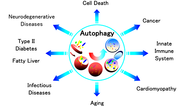 Caltag Medsystems: Autophagy: an Extensive Line Up of ...