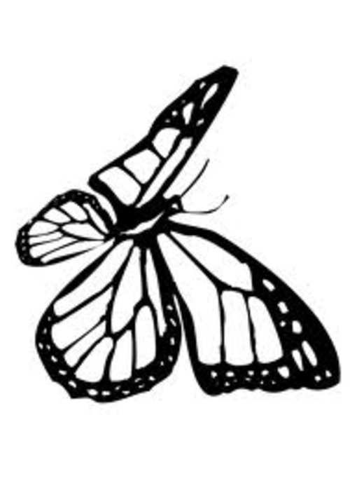Free Coloring Pages Monarch Butterfly Coloring Pages For Kids