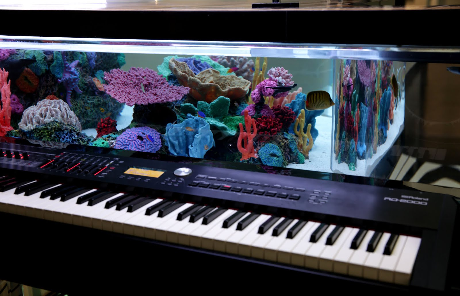Roland RD-2000 Stage Piano Featured on Animal Planet Program 'Tanked