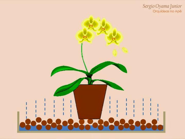 Bandeja umidificadora sob o vaso de orquídea