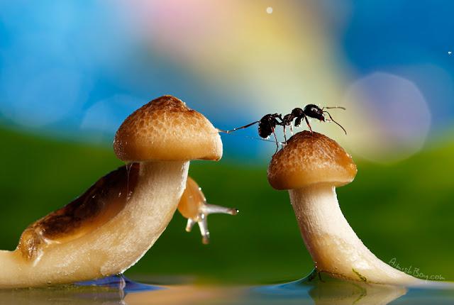 صور بعض الحشرات سبحان الله 6481517641_783d5deef