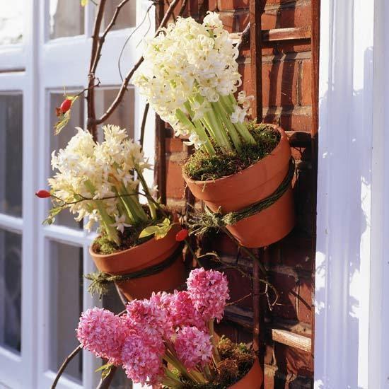 Designs For A Small Garden: Permaculture Ideas: Pot Plant Trellis