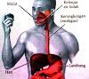 Jenis dan Fungsi Organ Pencernaan Utama dan Tambahan Pada Manusia