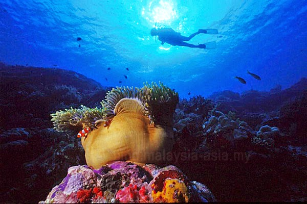 Beautiful dive sites around Miri, Sarawak