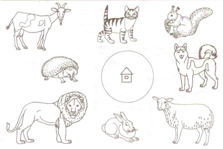 картинки задания детям по теме домашние животные сколько людей фамилией