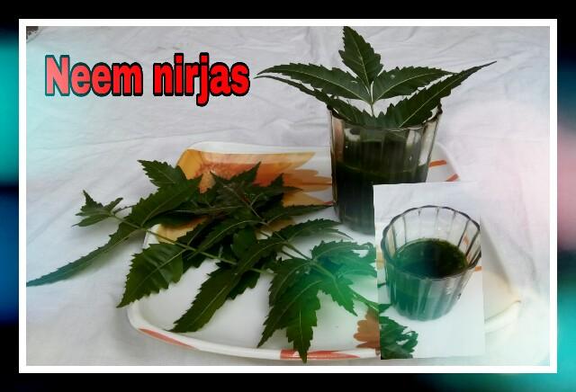 Azadirachta Indica,nim leaf, medicine,organic