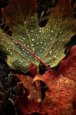 rain on leaves