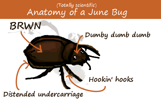 "Illustration of a June beetle, which has parts labelled ""BROWN"", ""Dumby dumb dumb"", ""Hooking hooks"", ""distended undercarriage"""