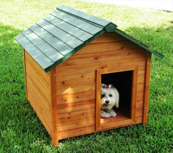 custom dog house design
