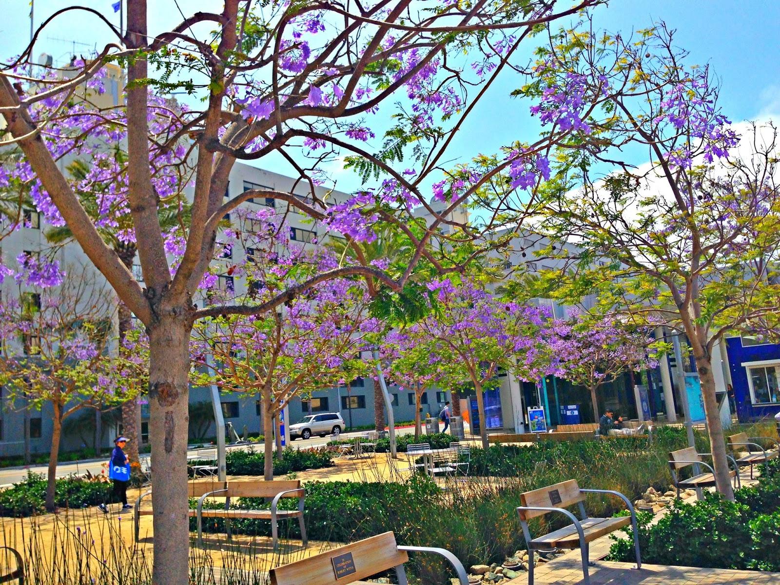 Relatively Jacaranda Trees in California | FEBETH ( Diary of a Domesticated  QE71