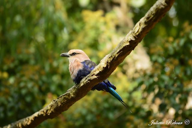 Oiseau tropical au Bioparc Doué-la-Fontaine