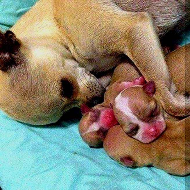 20 of the Most Heartwarming Pictures of Parents and Their Puppies
