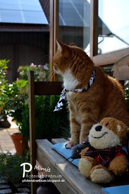 Katze Mimi auf einer Bank mit ihren Freunden