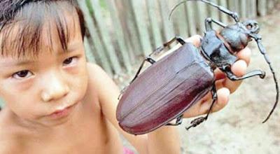 Os 12 maiores insetos do mundo e suas incríveis habilidades