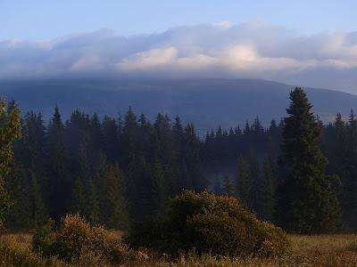 grzyby w sierpniu, sierpniowy poranek, grzyby 2016, wschód słońca w górach, poranne mgły, siedzuń jodłowy Sparassis nemecii, pieprznik trąbkowy Canthaellus tubeaformis, Craterellus cornucopioides lejkowiec dęty, Czubajka kania Macrolepiota procera