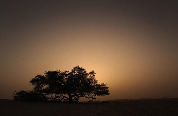 تعرفوا على شجرة الحياة فى البحرين lrIFO1-600x393.jpg