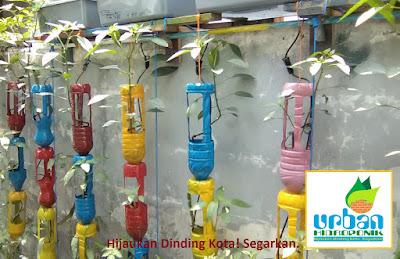 urban hidroponik, urban farming, jasa hidroponik, pelatihan hidroponik