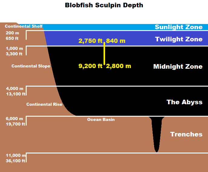 real monstrosities blobfish sculpin