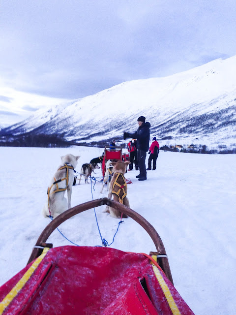 Norway Tromso dog sledding
