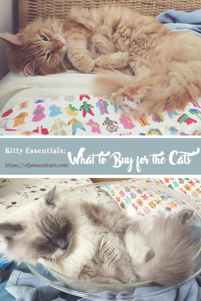 Having a pet at home is pretty much like adopting another child. One has to take responsibility in providing for the pet's needs and ensure its well being. Here are some kitty essentials that cat owners need to buy for their pets.