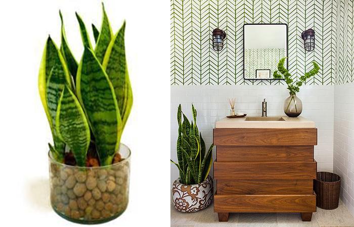 Plantas para decorar seu banheiro!  Abrir Janela -> Armario Para Banheiro Sao Jorge
