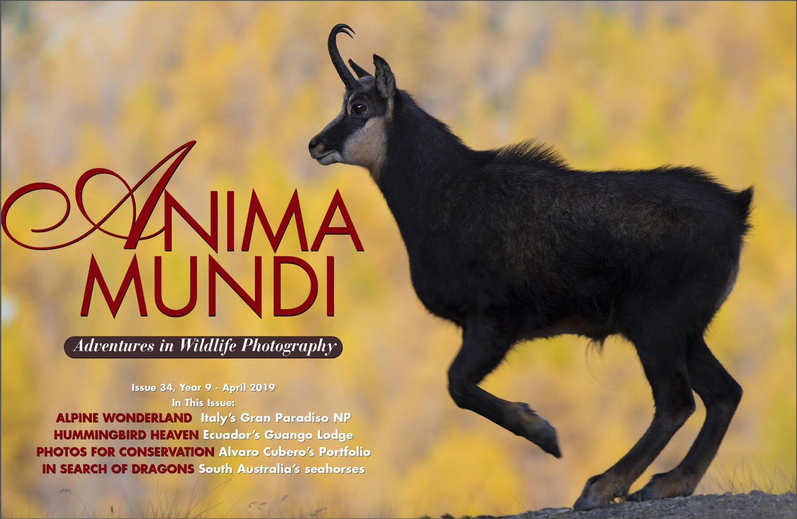 "Nota y Fotos en Revista On Line ""Anima Mundi"""