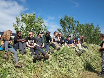 Hacer voluntariado en Islandia. ¿Dónde y cómo solicitarlo?