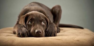 Doença periodontal afeta certa de 85% dos cães com mais de 3 anos