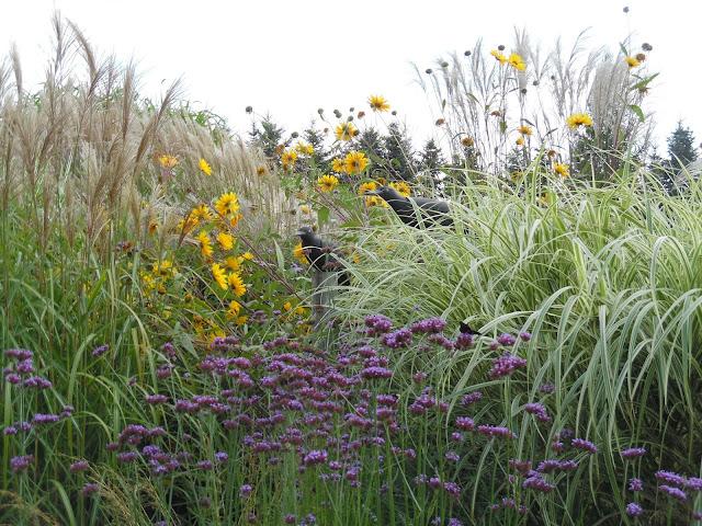 byliny i trawy na rabacie