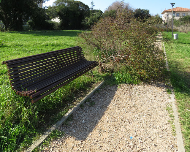 Overgrown bush, Via Manasse, Livorno