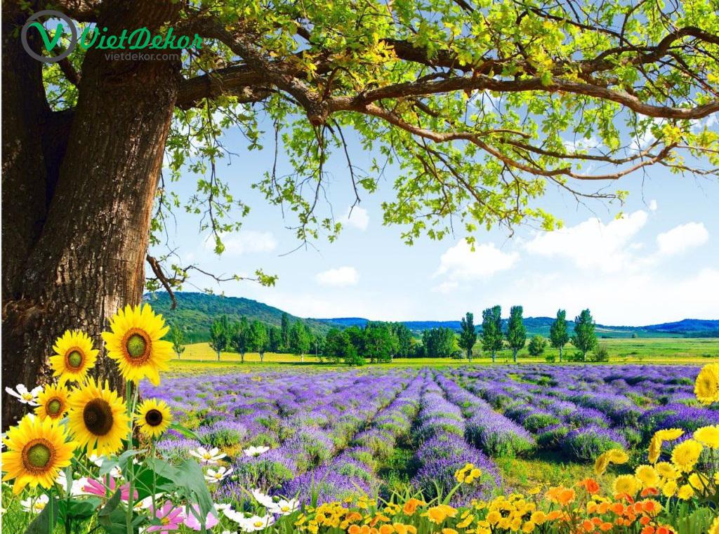 Tranh dán tường 3d cây lớn hoa hướng dương
