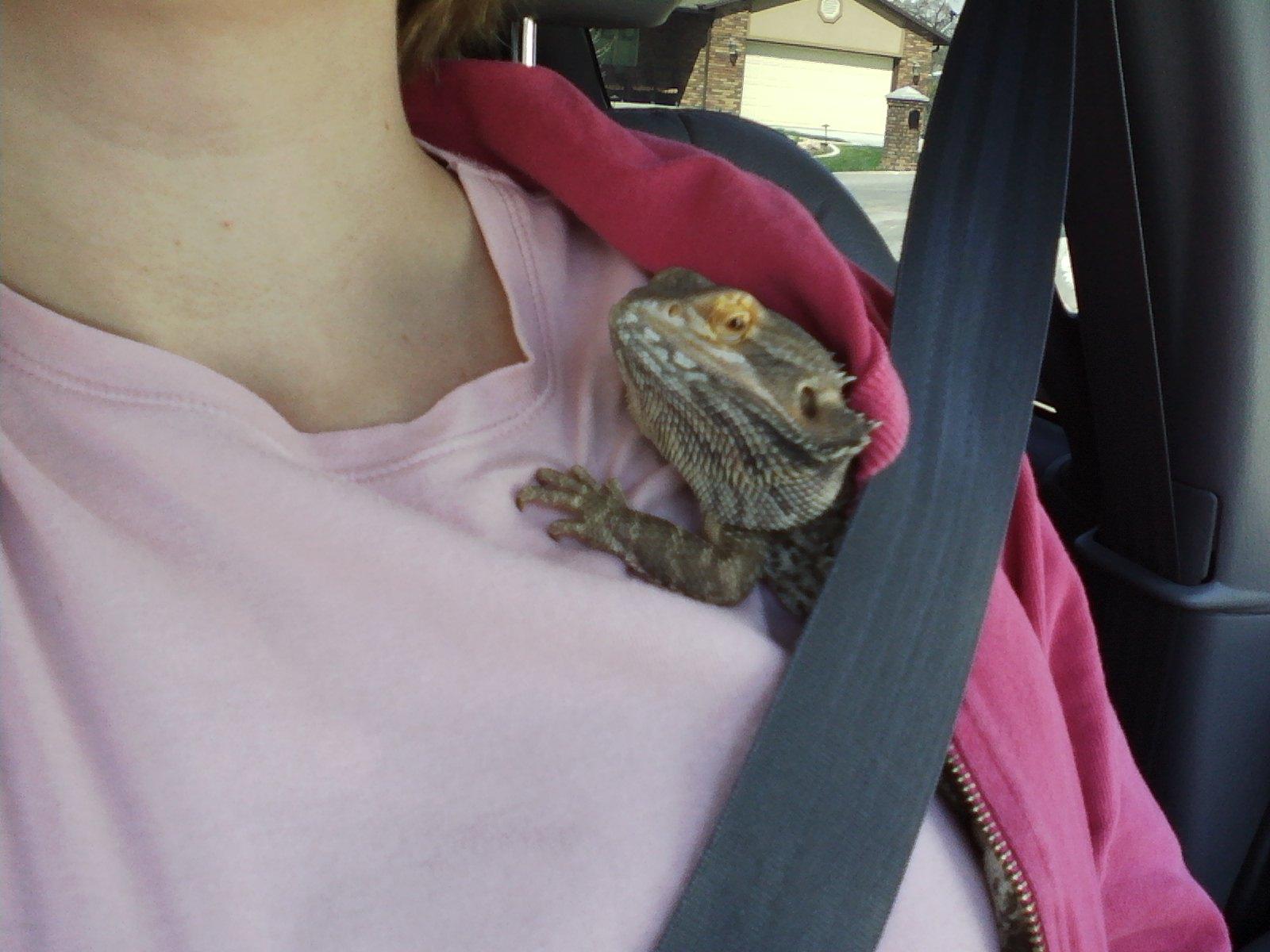 Sarah's Bearded Dragon Rescue: Sleeping Beardies