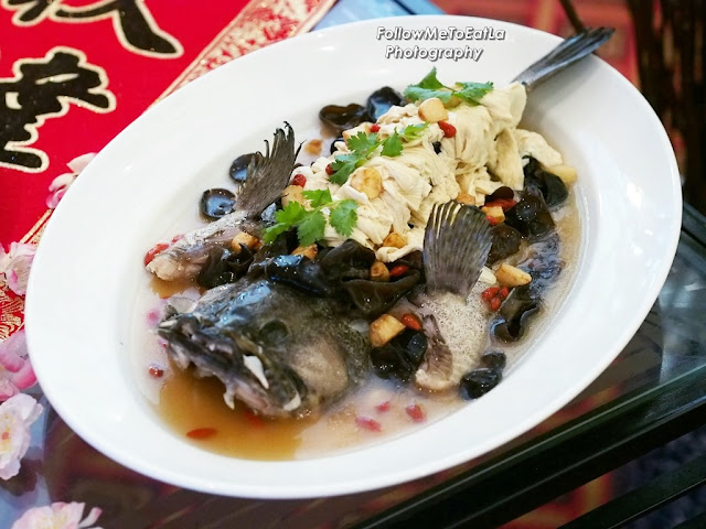 Steamed Dragon Tiger Garoupa With Black Fungus & Beancurd Stick