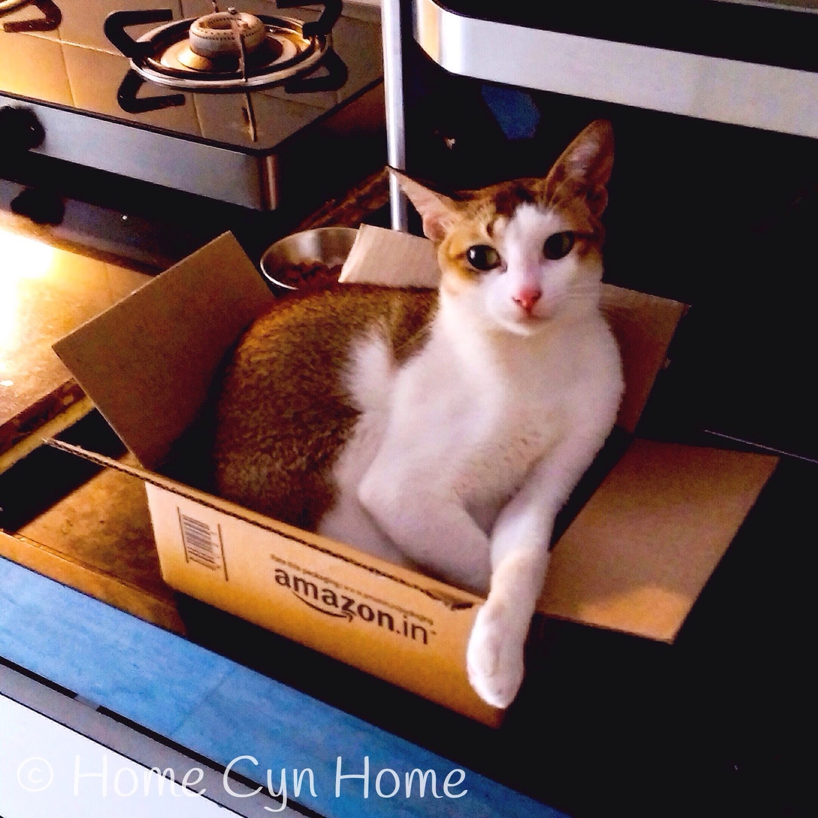 Cats have a particular attraction for boxes, size no bar
