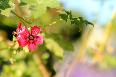 Fuchsia Flowers on a Vine - Flower Photography by Mademoiselle Mermaid