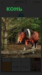 конь стоит в загоне склонив голову за ограждением