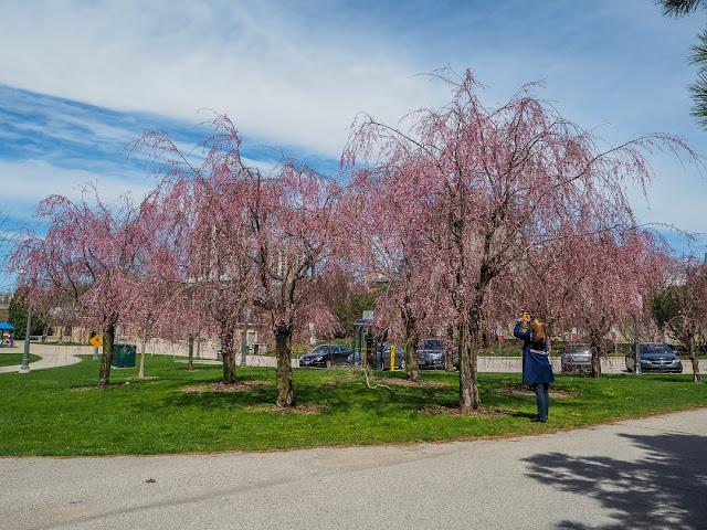 Katherine Forster Capturing Spring Details by Viliam Glazduri