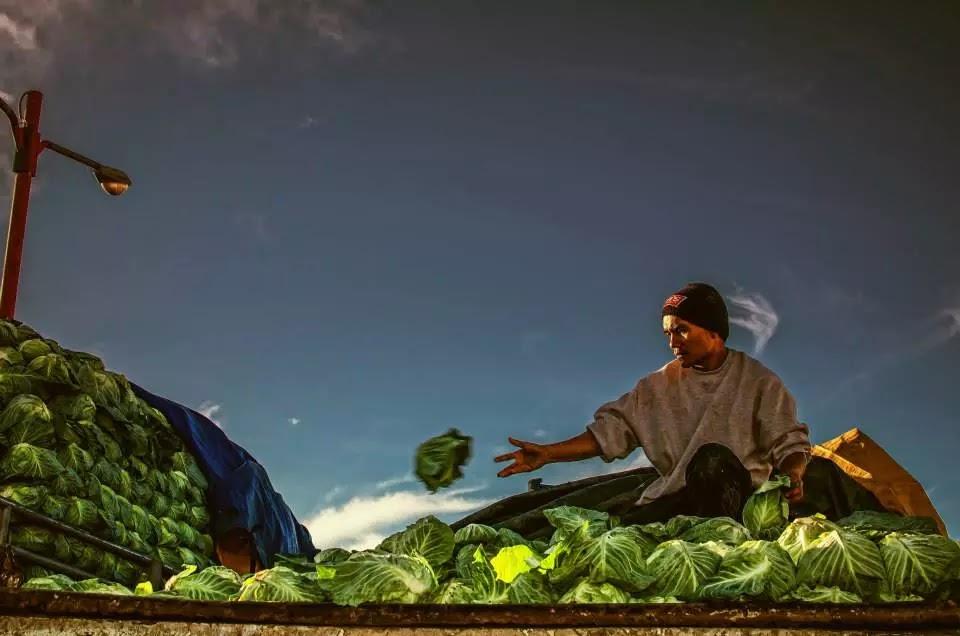 Cabbage Sorter Trading Post La Trinidad Benguet Cordillera Administrative Region Philippines