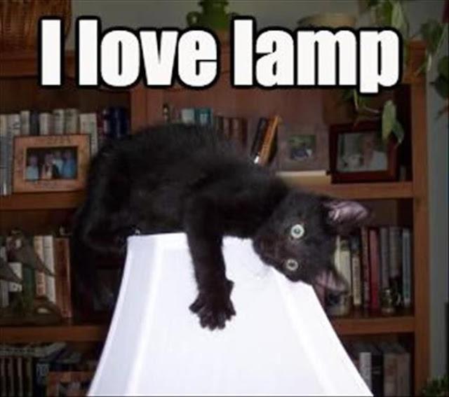 Funny I Love Lamp Cat Joke Picture