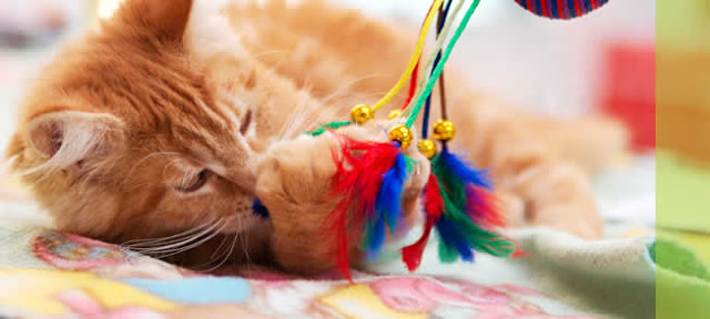5 Reason you should buy your cat a toy