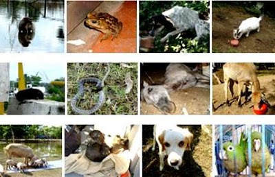 Foto de animales por la Semana de la Vida Animal
