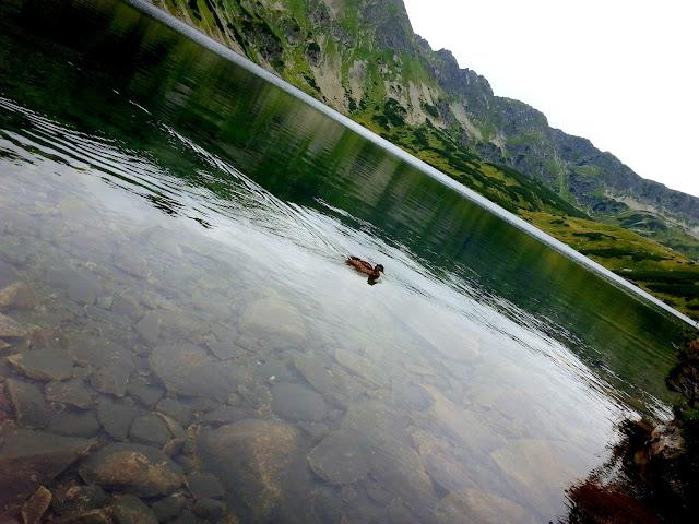 kaczka w gorach